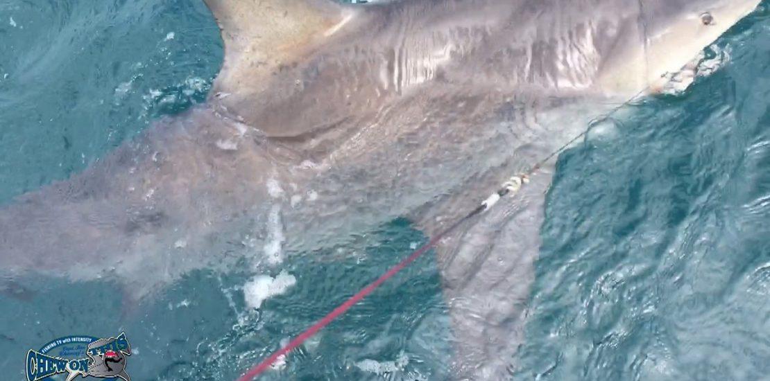 Big bull shark caught on diawa spinning rod black gold for Saltwater fishing expo